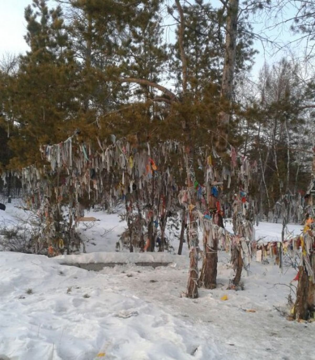 Шаман-дерево в Республике Саха (Якутия)
