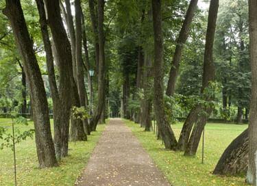 Тематическая экскурсия «Усадебный парк в Остафьеве»