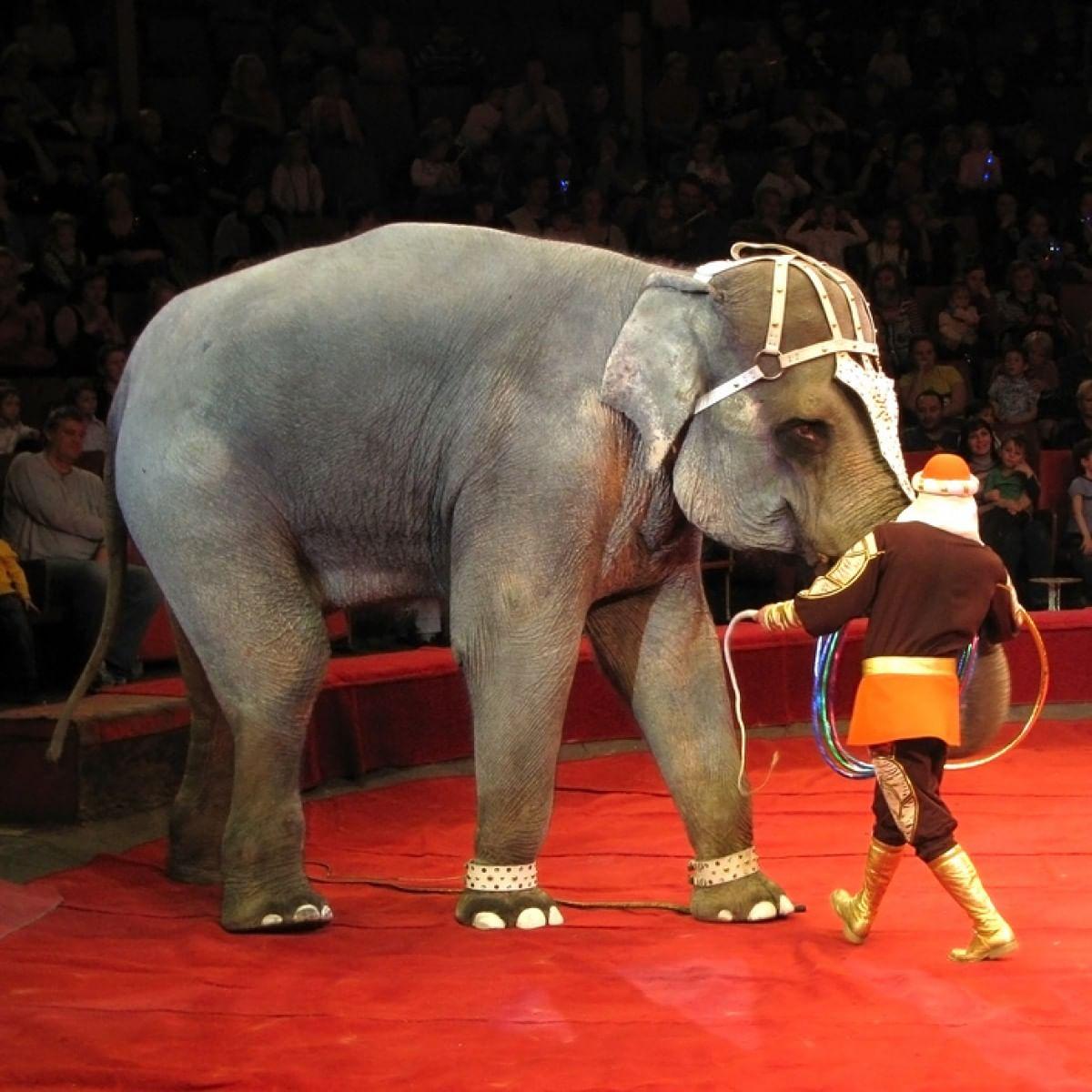 Цирк на Фонтанке_1