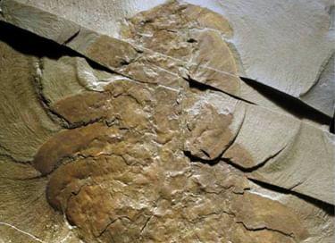 Выставка «Новые экспонаты в Музее естественной истории»