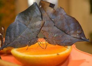 Музей живых бабочек «Тропический рай»