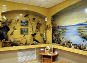 Музей природы заповедника «Байкальский»