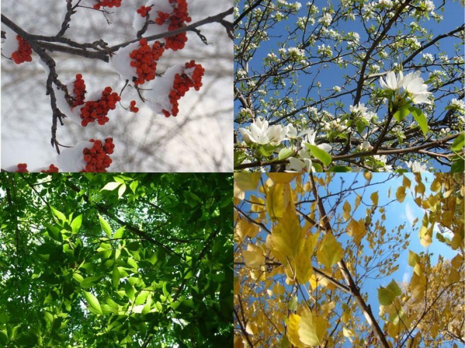 Картинки времен года