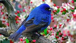 Птицы в кино и на сцене