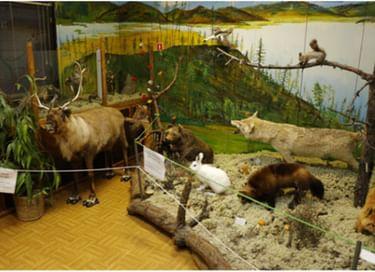 Выставка «Животный мир Приполярья»