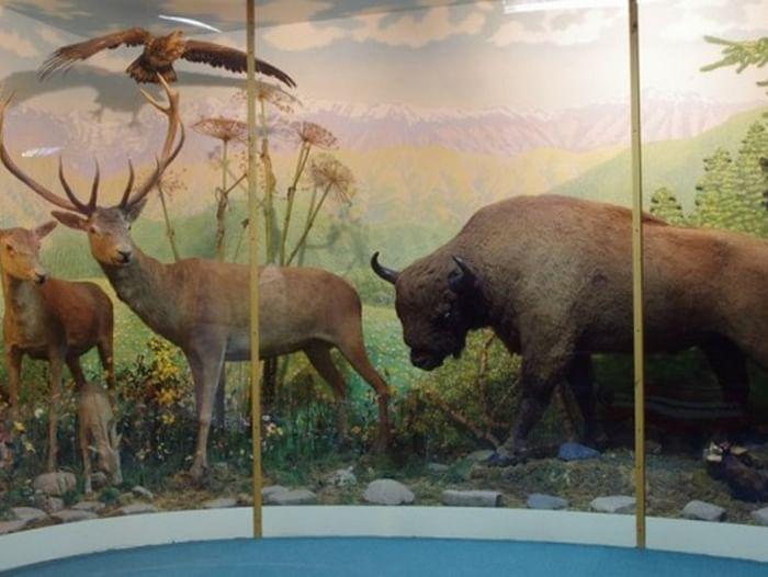 Экспозиция «Природа Западного Кавказа»