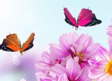 Мастер-класс «Бабочки»