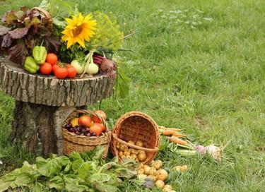 Праздник «День зарайского огородника»