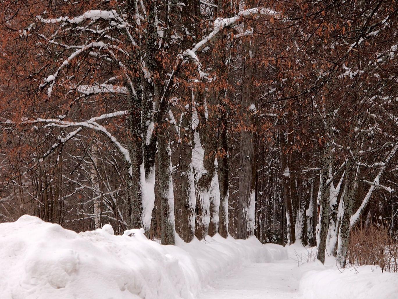 Абрамцево зимнее