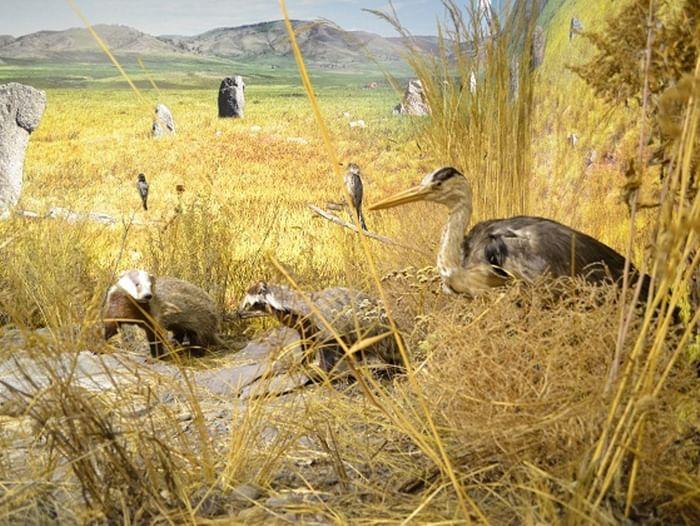 Постоянная экспозиция «Природные богатства Республики Хакасия»