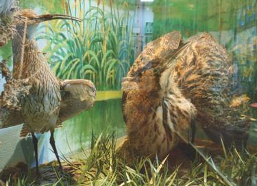 Выставка «Природный мир Тульского края»