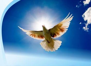 Городской разножанровый фестиваль «На крыльях надежды»