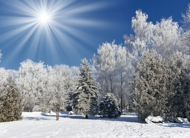 Встреча Нового года в поселке Левашово
