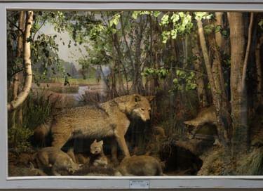 Выставка «Природа Ярославского края»