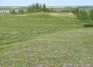 Хэйбидя–Пэдарское в Ненецком автономном округе