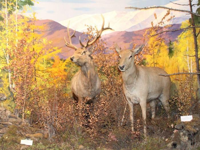 Выставка «Природа Забайкалья»