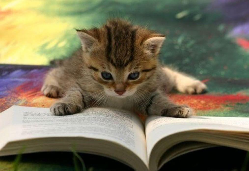 Смешные картинки про школу с животными, влюбленных