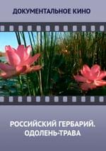Российский гербарий. Одолень-трава
