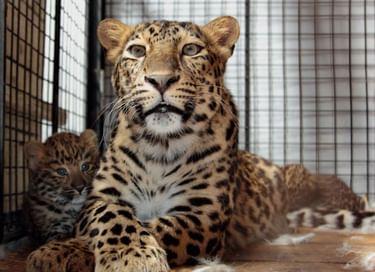 Праздник «Наши зоо-мамы»