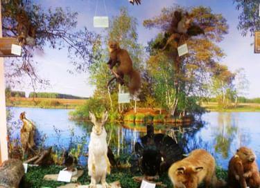 Выставка «Природа нашего края»