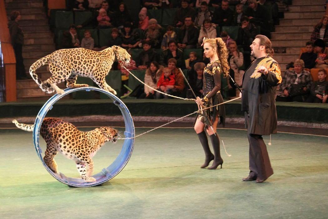 люди прикольные фото цирка всего отмыть