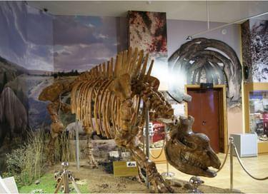 Экспозиция «Сафари по-неандертальски»