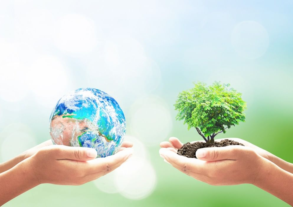 ecology soes the anle of sun Search the history of over 338 billion web pages on the internet.