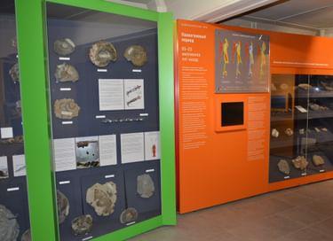 Выставка «Геологическое прошлое Сахалина и Курильских островов»