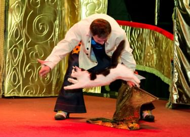 Спектакль «Cats-шоу»