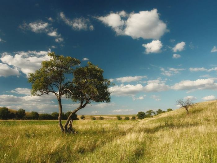 Экскурсия «Степные пейзажи Александра Эртеля»