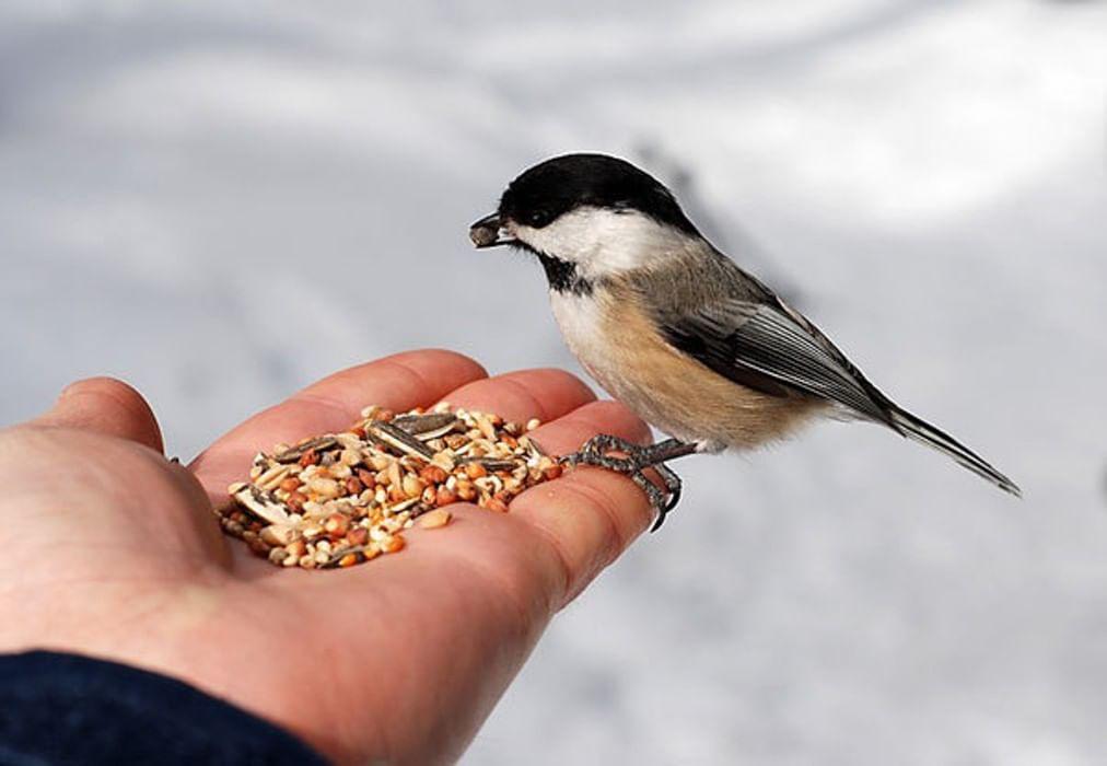зрителей покормить птицу картинка большого зеркала
