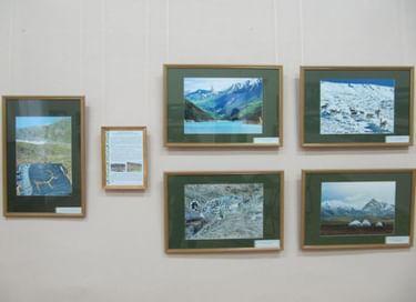 Выставка «Экология: музейный  взгляд»