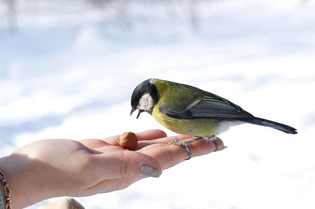 Картинки ко дню птиц для детей, днем рождения