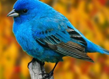 Встреча «О чём щебечут птицы»
