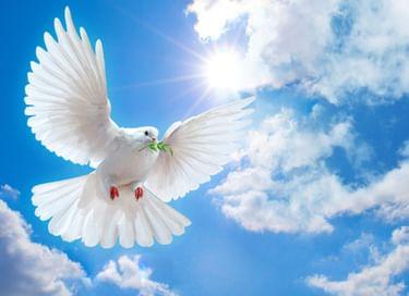 IV Ежегодный конкурс чтецов «Спасибо за мирное небо»