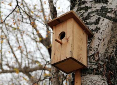 Интерактивное занятие «Встречаем птиц!»
