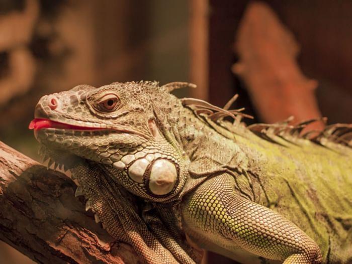 Выставка экзотических животных «Музейное сафари»