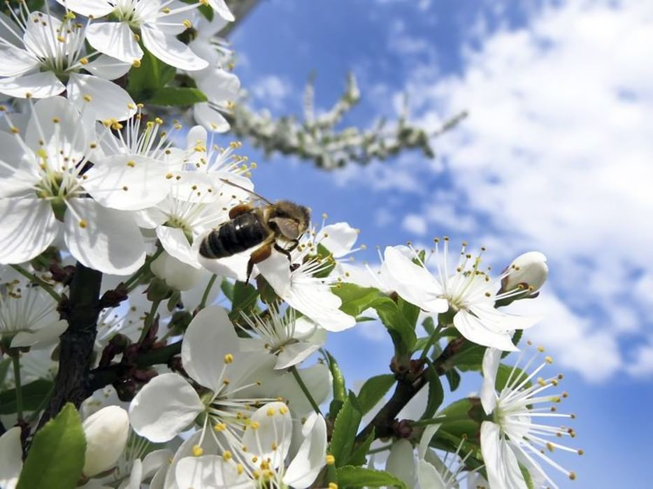 Картинки весна и пчелки