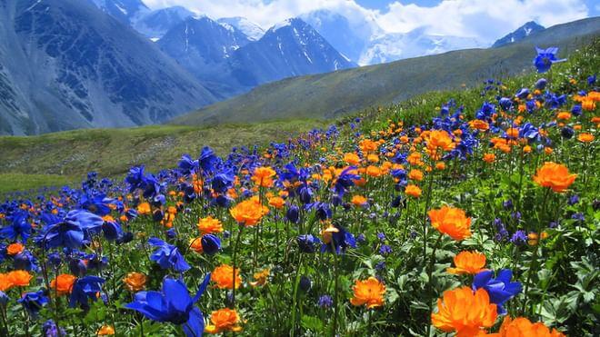 алтай фото горы