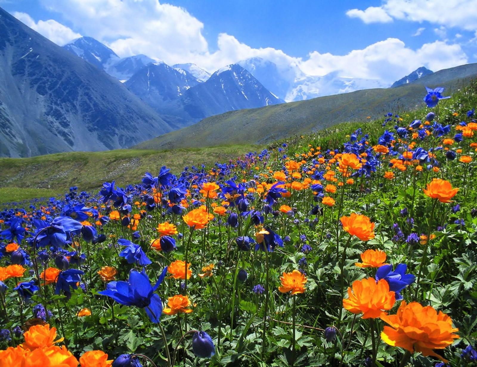 Доклад про горы алтая 442