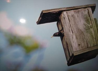 Фотовыставка «Чудо в перьях»