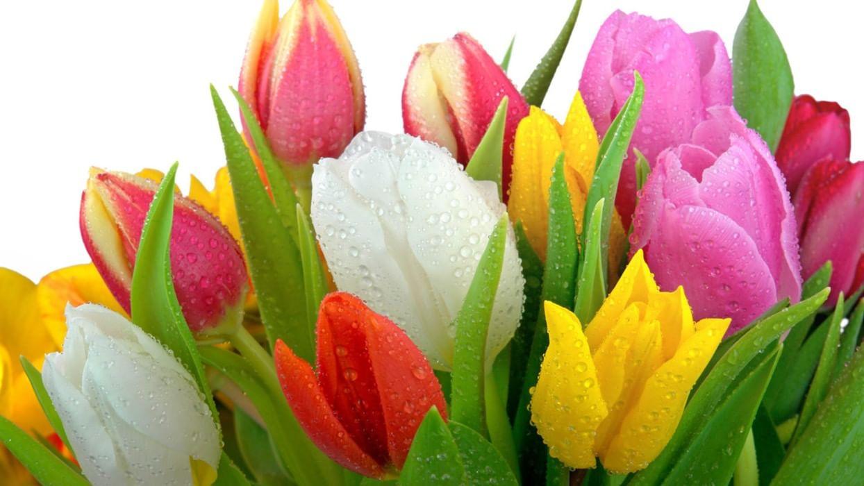 картинки с тюльпанами и весной объявил