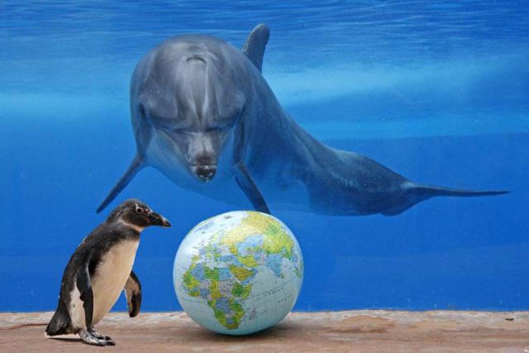 водным знакомство миром с
