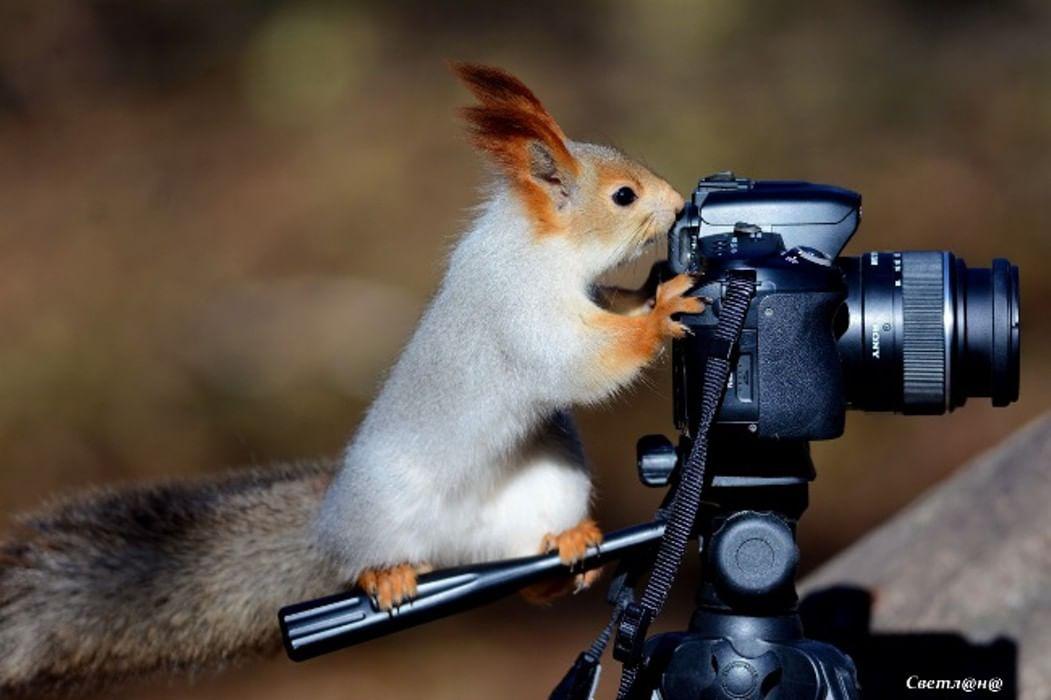 того, чтобы фотоаппарат и животные картинки могу