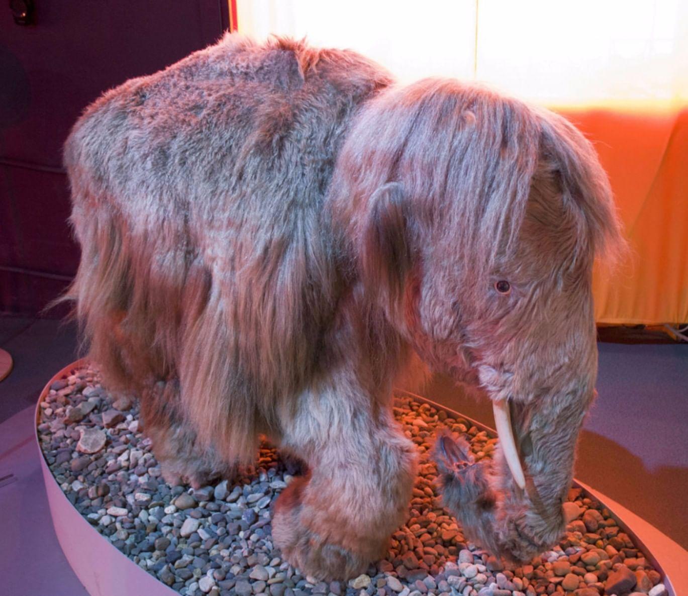 Экспонат Музея пермских древностей. Фотография: museum.perm.ru