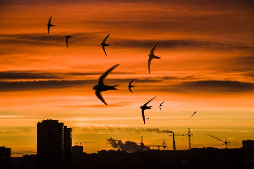 жил птицы над городом вашето внимание една