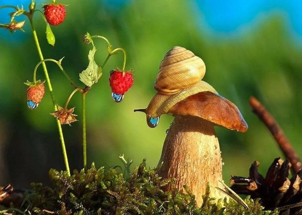 Картинки мир живой природы