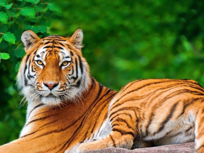 Игровая программа «День тигра»