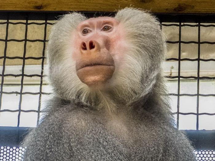 Встреча «Пополнение коллекции приматов»