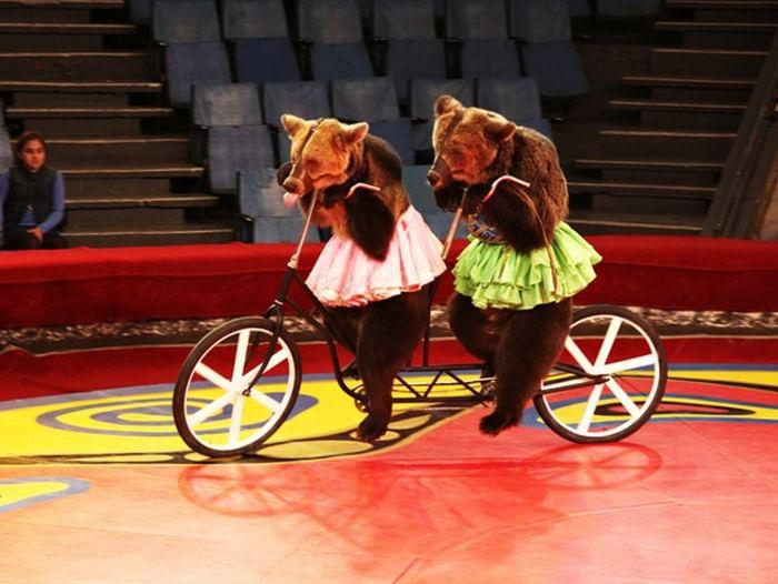 Цирковое представление «Всемирно известный медвежий цирк Филатовых»
